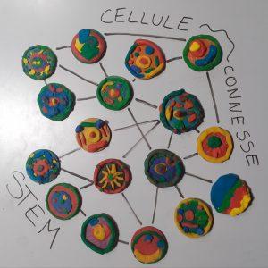 Cellule connesse - STEM bottone colorati collegati